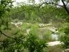 In diesem Teich wohnen Lurche