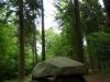 Großsteingrab im Steinfelder Holz